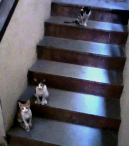 Cats on a stair-case